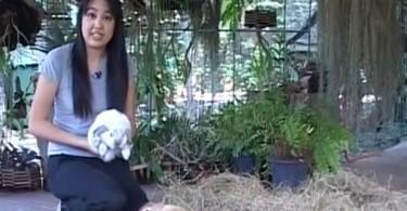 Kaniner i Thailand
